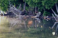 Let A Little Sunshine Through (matthewkaz) Tags: limelake lake water reflection reflections trees sun sunshine underwater cedar maplecity leelanau michigan summer puremichigan 2017 fog