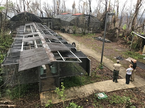 Damaged cages at Puerto Rican parrot aviary