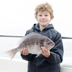 "Keir Tweedale -  Black Bream • <a style=""font-size:0.8em;"" href=""http://www.flickr.com/photos/113772263@N05/37094322130/"" target=""_blank"">View on Flickr</a>"
