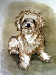 Tapioca, by Naysa G. - DSC01812 (Dona Minúcia) Tags: art painting watercolor study paper animal dog cute tapioca arte pintura aquarela cãocachorro fofo gracinha