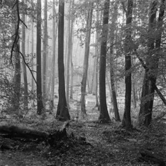Swamp and sacred grove (Other dreams) Tags: łynasprings forest fog moisture water mud sacredgrove swamp wetland gove woods haze distance oldprussians streams łyna springs source masuria poland overcast nofilter analog film ilfordfp4 rolleiflex35f tlr 6x6