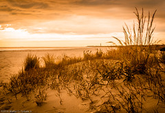Dunes at Sunset Blvd (walter2046) Tags: sunsetblvdbeach seascapes landscapes sunsetblvd sanddunes newjersey capemay outdoors njshore sunset dunegrass
