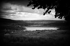 Rural Rochdale (Missy Jussy) Tags: rochdale rural piethornevalley countryside newhey ogden shaw reservoir village views valley trees frame sheep hills sky clouds factory bw blackwhite blackandwhite landscape lancashire northwest england canon 50mm ef50mmf18ii canoneos5dmarkii