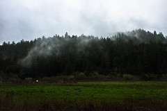 (maxinepowerr) Tags: california landscape adventure sanfrancisco sanfran armstrong redwood forest armstrongredwoodforest foggy moody