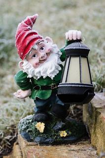 Cold Gnome
