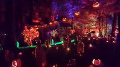 The Great Jack-O-Lantern Blaze (SurFeRGiRL30) Tags: thegreatjackolanternblaze pumpkinblaze vancortlandtmanor hudsonvalleyny pumpkins jackolanterns halloweendecorations halloween lights lightingdesign lightslampslightingdesignilluminateme awesome awesomesauce night glow spooky incredible