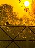 The golden hour (karthikabalasubramaniam) Tags: goldenhour goldenlight pond heron morning bliss nature magic composition light warm weather india photography dawn