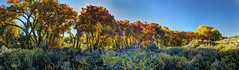 Bosque at sunset (JoelDeluxe) Tags: tingley beach abq bosque albuquerque dukecity nm newmexico biopark ponds fall colors red orange yellow green blue ducks wildlife fishing recreation landscape panorama hdr joeldeluxe