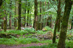 Ireland - Killarney National Park - Woodland (Marcial Bernabeu) Tags: marcial bernabeu bernabéu ireland irlanda irish killarney national park parque nacional nature naturaleza woodland bosque green verde