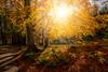 Through the autumn trees (David Fletcher Photography) Tags: 051117 atumn allan