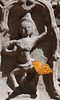 DSC_1559ThommanonTempelDetailMetPrachtigeVlinder (De avonturen van de Argusvlinder) Tags: thommanon angkor siemreap cambodja suryavarmanii