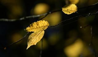 Golden Bokeh - Explored 18. Oct 2017