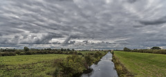 Paddling down the river (David Feuerhelm) Tags: nikkor river swans wildfowl sky clouds wideangle drama green dramatic newbedfordriver cambridgeshire fens scenery nikon colorefex d750 2470mmf28 chatteris