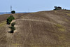 Scorcio di fine estate (luporosso) Tags: natura nature naturaleza naturalmente nikon nikond500 imdifferent nikonitalia paesaggio paesaggi landscape landscapes marche italia italy girasoli sunflowers country countryside