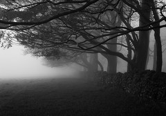 Autumn Mists (l4ts) Tags: landscape derbyshire peakdistrict whitepeak autumn newhaven horseshoe plantation trees mist rain drystonewall blackwhite appickoftheweek