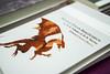SERVICIO DE PUBLICACIONES UAM (UCCUAM) Tags: uam uccuam universidad nochedelosinvestigadores noche europea de los investigadores madrid