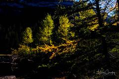 43 LUMIERE D'AUTOMNE (CouleursPhotographie) Tags: couleursphotographie suisse 52photos2017 derborence valais couleursphotographiech micaëlchevalley conthey ch