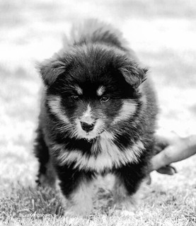 Aiko in bw, 8 weeks old