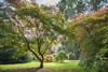 IMG_2820-HDR-Edit.jpg (tybach) Tags: canon750d arboretum westonbirt