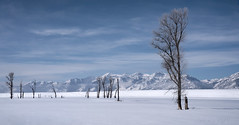 silent sentinels (laura's Point of View) Tags: trees winter cold snow silence sky mountains tetons grandtetonnationalpark gtnp jacksonhole wyoming west western white beauty beautiful nature landscape peaceful lauraspov lauraspointofview explore explored
