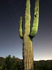 Giant Saguaro at Night (JoelDeluxe) Tags: saguaro national park border crickethead inn tucson az arizona cacti landscape bednbreakfast nighttime long exposures stars wideopen skies joeldeluxe cactus sky