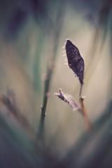 autumn II (christian mu) Tags: flowers nature bokeh botanicalgarden botanischergarten germany schlossgarten muenster münster sonya7ii sony christianmu 9028g 9028 90mm macro autumn