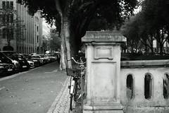 Kö-Graben Düsseldorf 2 (Amselchen) Tags: kö düsseldorf germany mono monochrome bnw blackandwhite bike bicycle trees cars buildings city cityscope fujifilm fujifilmxseries fujinon xt2 fujifilmxt2 xf35mmf14r bokeh blur dof depthoffield