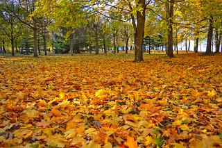 Autumn �