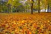 Autumn 🍁 (L.Lahtinen (nature photography)) Tags: autumn foliage fallcolors fall finland landscape nature naturephotography leaves colorful autumncolors autumnleaves beauty ruska syksy maisema nikond3200 lehdet flora 7dwf europe