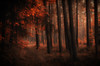Dreamy forest (☺dannicamra☺) Tags: nikon d5100 germany bavaria landscape nature forest woods red trees leaves path bayern wald holz baum natur landschaft rot herbst oktober autumn fall