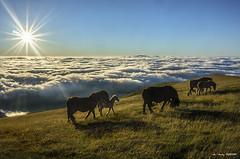 ¡A vivir! (Jabi Artaraz) Tags: jabiartaraz pottoka horse amanecer landscape sunset sunrise animals animali pax paz nature natura naturaleza naturesfinest naturephotoshp gorbea montaña despertar