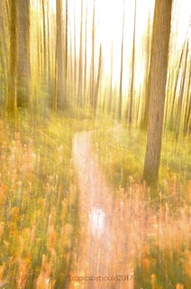 A walk in the forest. ICM.