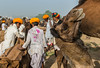 Pushkar camel fair | 2016. (Vijayaraj PS) Tags: pushkar rajasthan india iamnikon nikond3200 asia camel streetphotography street indianstreetphotography incredibleindia indianheritage pushkarcamelfair lifestyle outdoor sky camelherder herder sport riding herders