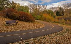 Bench & Pathway (DCZwick) Tags: bench parkbench pathway bikepath leaves fall bushes trees park confederationpark calgary alberta canada pentaxk3 da1685