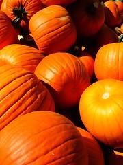 I guess it's time to start carving... (e r j k . a m e r j k a) Tags: pennsylvania frankfortsprings pumpkins harvest fall autumn watercolor us30 lincolnhighway pa18 erjk