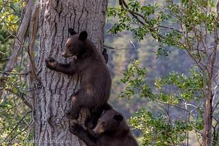 Waterton Cubs
