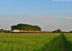 Tra Pioppi e Frumento - E.652 142 (Pignata Matteo) Tags: e652 142 mir mercitalia rail telescopici ravenna tarvizio treville transito treno merci