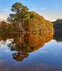 Autumn Reflections (Greg Webb) Tags: loch lochlomond lake autum water reflection reflections trees scotland