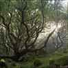 early morning in late summer (steve-jack) Tags: hasselblad 501cm 80mm cb kodak ektar wales pembrokeshire bellinifoto monopart c41 kit epson v500