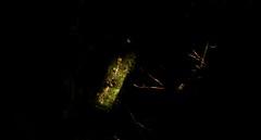 Franz Josef Glacier, West Coast, New Zealand (Gonzalo Aja) Tags: franz josef glacier glaciar west coast costa oeste nueva zelanda new zealand south island tree arbol light luz dark oscura darkness oscuridad green verde nature naturaleza forest bosque scenic landscape paisaje d5000