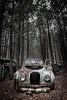 Overgrown (Dan Fleury) Tags: cars photography junkyark wrecks wreck auto car old junk junkyard canada can cans2s ontario milton guelph