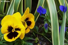 Floral Set. Conjunto floral (A. Muiña) Tags: flowers color decoración macro airelibre freshair garden jardín naturaleza nature nikon nikond90 flor macrofotografía