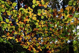 Bunte Blätter im Gegenlicht