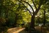 """El Parque (Tenisca """"Alexis Martín"""") Tags: puestasdesol ocaso sunset ocasos sunsets alexismartín alexismartin alexismartínfotos alexismartinfotos amfotos árboles árbol tree"""