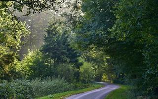 Brunsholm - der Weg nach Downtown Bergenhusen, Stapelholm (4)