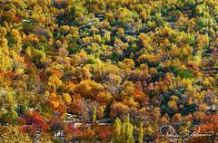 Autumn (TARIQ HAMEED SULEMANI) Tags: sulemani supershot sensational nature north northernpakistan nikon nagar tariq tourism trekking tariqhameedsulemani travel theunforgettablepictures fall