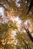 look up! - Nokia 6 (Andreas Voegele) Tags: nokia nokia6 smartphone mobilephone handy light forest search andreasvoegelephoto landscape lookup