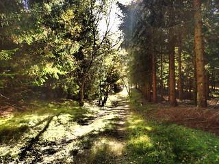 Forêt du Ché