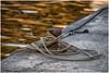 Liguria , harbor scene  ... (miriam ulivi) Tags: miriamulivi nikond7200 italia liguria sestrilevante porto harbor banchina quay bitta cavidormeggio bollard mooringcables riflessi reflections tramonto sunset mare sea acqua water