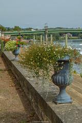 Tournus riverbank (mahesh.kondwilkar) Tags: bourgogne bourgognefranchecomté burgundy europe france riverbank saôneetloire tournus